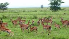 Parque Nacional de Gorongosa