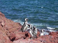 Pingüinos en Puerto Madryn, Argentina
