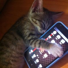Cat with SmartPhone meme