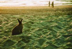Met konijn Sam op het strand, afscheid is moeilijk