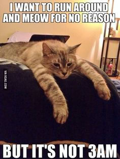 This is currently the exact story of my life. Just got a new cat, got 4 hours of sleep last night.