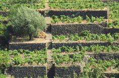Wine Blog Roll - Il Blog del Vino italiano: Vigneti in Italia e nel mondo - La grande bellezza del Vino
