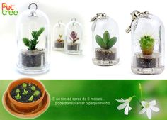 9,99€ Pet tree, pet plants que simbolizam Amor, Amizade, Paz, Força e muitos outros sentimentos.