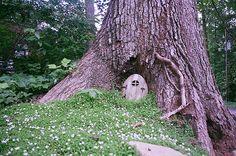tree hobbit houses