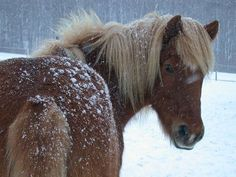 Horses In Snow, Rind, Winter, Animals, Donkeys, Other, Winter Time, Animales, Animaux