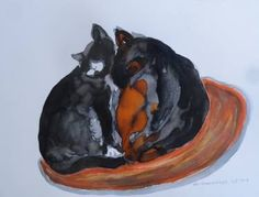 2 Cats together_ 7