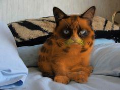 """""""Tard"""" the grumpy cat as Tardfield"""