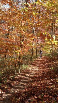 Trail: Fair Hill, Maryland.