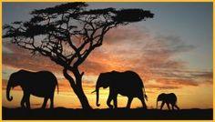 Proef Afrika! Heerlijke biologische, fairtradekoffie. Goed voor (mede)mens en milieu!
