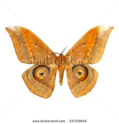moth butterfly - stock photo