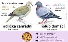 Určování ptáků - Ptačí hodinka Biology, Montessori, Birds, Science, Education, Learning, Nature, Animals, Woodworking Tools