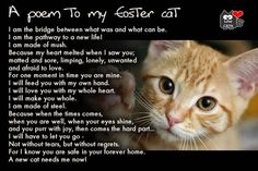 Dedicated to all the wonderful foster homes & families FOSTERING SAVES LIVES!