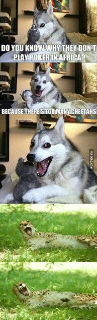 Funny, memes, and husky: what do you call dog magician? Husky Jokes, Funny Dog Jokes, Corny Jokes, Stupid Funny Memes, Funny Relatable Memes, Pun Husky, Dad Jokes, Hilarious, Dog Memes