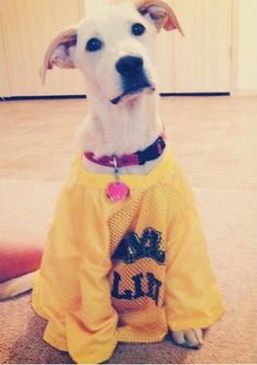 I wonder how hard it is to get a dog into a Baylor Line jersey... #SicEm