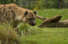 Toronto Zoo - Sept 6, 2014 | by MorboKat