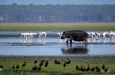 The iSimangaliso Wetland Park was listed as South Africa's first World Heritage Site in December 1999 in recognition of its superlative natural beauty. South Afrika, Durban South Africa, Wetland Park, Bay Lake, Kwazulu Natal, Out Of Africa, African Safari, African Animals, Mundo Animal