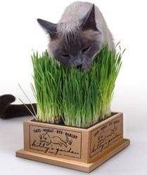 Kitty's Garden Organic Grow Your Own Cat Grass for felines - yes, I keep this in my kitchen windowsill with the herbs... kitty's herbs!  Adorable.