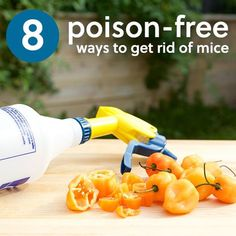 8 Natural, Poison-Free Ways to Get Rid of Mice herbsandoilshub. Claire shares 8 poison-free ways to get rid of mice. Home Remedies, Natural Remedies, Belive In, Mouse Poison, Grand Menage, Getting Rid Of Mice, Limpieza Natural, Household Pests, Household Cleaners