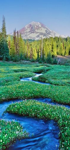 Serpentine Stream, Mt. Jefferson in the Three Sisters Wilderness, Central Oregon by Mike Putnam