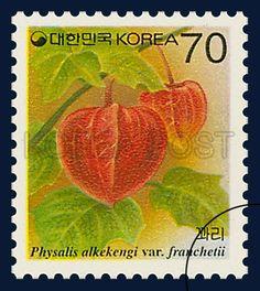 DEFINITIVE POSTAGE STAMP (70WON), Physalis alkekengi var. francheti, Plants, Red, Green, 1995 03 15, 보통우표 (70원권), 1995년 3월 15일, 1805, 꽈리, postage 우표