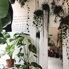 We're into the writing on this wall // cred // Interior Design Plants, Interior Styling, Indoor Plants, Indoor Outdoor, Rue Verte, Mother Earth, Greenery, Plant Leaves, Succulents