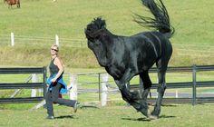 persian horse - Google Search