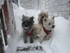 Col. Potter Cairn Rescue Network: Sunday Sweets Mia, Max & Lovey