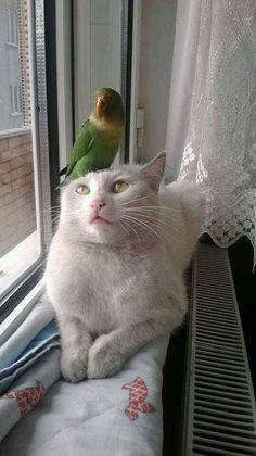 Bird Wakes His Best friend - While you might think a cat would rather attack than befriend a bird, think again.