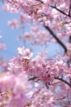 Appreciate the miracles.... sakura