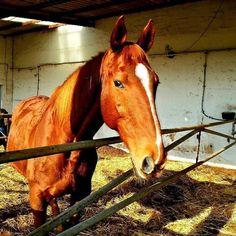 by http://ift.tt/1OJSkeg - Sardegna turismo by italylandscape.com #traveloffers #holiday | I cavalli  se Dio ha fatto qualcosa di più bello lha tenuto per sé. #sardegna #italy #lanuovasardegna #igerscagliari #instasardegna #gopro #horse #igersardegna #sardegnaofficial #horses #sardegna #hdr #waves #winter #loves_sardegna #photooftheday #landscape #loves_united_sardegna #sardegna_super_pics #loves_united_cagliari #sardiniaexp #nature #sardegnaofficial #picoftheday #instagood #sardiniamylove…