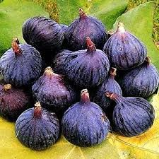Image result for fig trees
