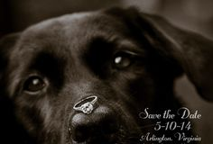 Save the Date with dog and ring!