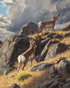 Wildlife Paintings, Wildlife Art, Animal Paintings, Animal Drawings, Camping Images, Deer Pictures, Hunting Art, Western Landscape, Creature Concept Art