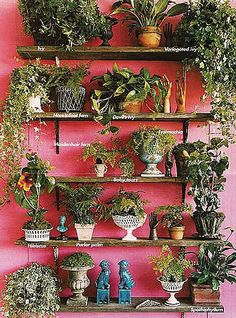 An attractive wall of various types of house plants. I love some of the vessels there in. This is just a snippet of how creative you can be for a little money. You should be able to find these ceramic items at almost any thrift or second hand shop.
