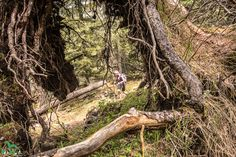 Trunks, Plants, Mountain Climbing, Drift Wood, Tree Trunks, Plant, Planets
