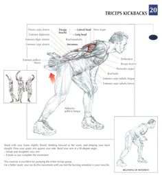 Best triceps workouts for mass and definition Before talking about exercises for the triceps, to tell you a few things first on this muscles. First triceps has three heads: the lateral, medial and long (the highest). So you have to … Continued Sport Fitness, Fitness Diet, Mens Fitness, Workout Fitness, Health Fitness, Forma Fitness, Workout Posters, Muscle Anatomy, Triceps Workout