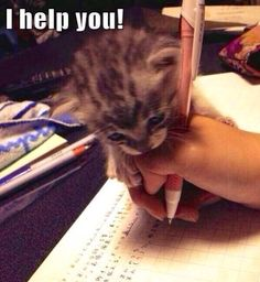 Kitten essay help