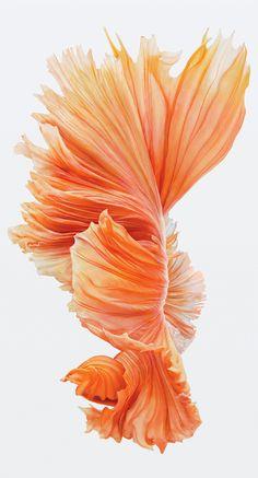 iphone 6s fish wallpaper