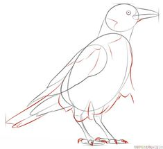 How to draw a crow step by step. Drawing tutorials for kids and beginners. Bird Drawing For Kids, Drawing Tutorials For Kids, Art Tutorials, Crows Drawing, Bird Drawings, Animal Drawings, Drawing Lessons, Drawing Tips, Sketches