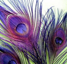 Large Purple Peacock Feathers by fancygoods on Etsy