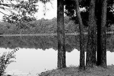 11th of August   Title: Reflection of nature Artist: Ron Stafford Medium: RAW digital print   #paisleyscarfphoto