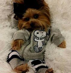 Snoopy Yorkie