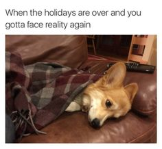 """More like, """"When the holidays are over and you have to face college again."""" Cute Dog Memes, You Funny, Funny Dogs, Animal Memes, Funny Animals, Some Fun, Funny Texts, Corgis, Bones"""
