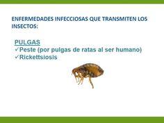 Repelente de insectos | +Felicidad +Bienestar Beef, Food, Spa, Products, Insect Repellent, Happiness, Wellness, Entryway, Meat