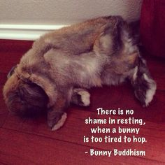 There is no shame in resting, when a bunny is too tired to hop. - Bunny Buddhism