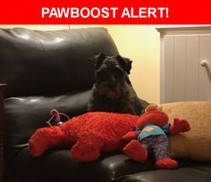 Please spread the word! Lou was last seen in Heath Springs, SC 29058.
