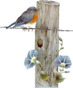 Birds tubes - great idea with fence posts...