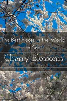 The Best Places in the World to See Cherry Blossoms www.casualtravelist.com