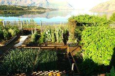 Annabel Langbein the Free Range Cook vegetable garden, overlooking the beautiful Lake Wanaka, New Zealand. Vegetable Garden Planters, Planting Vegetables, Growing Vegetables, Veggie Gardens, Amazing Gardens, Beautiful Gardens, Landscape Design, Garden Design, Lake Wanaka