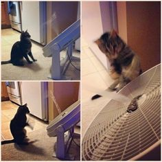Duct tape + fan = instant cat toy. | 51 Insanely Easy Ways To Transform Your Everyday Things
